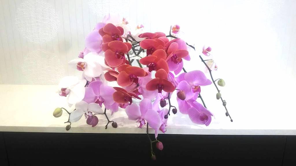 当院のお花です